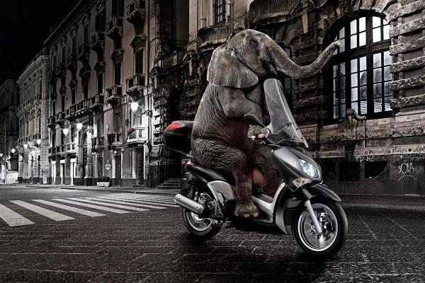 Un elefante paseando en moto