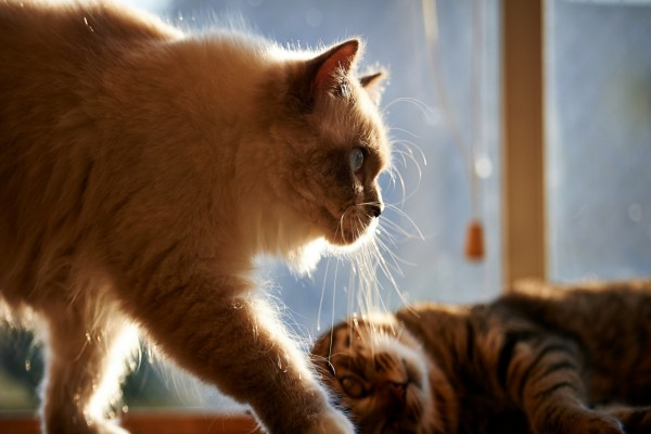 Dos gatos junto a la ventana