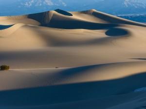 Postal: Huellas en el desierto