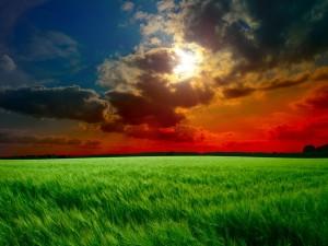 Rayos de sol entre las nubes sobre un campo verde