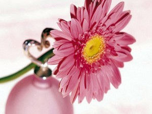 Gerbera rosa en un pequeño jarrón