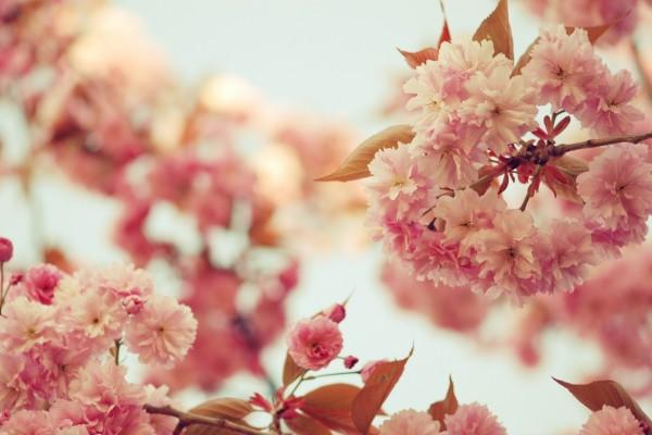 Ramas con bellas flores y hojas