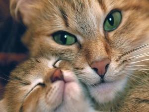 Gata abrazando a su gatito