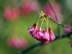 Flores agrupadas en el extremo de la rama
