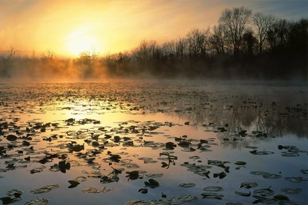 Hojas de nenúfar y bruma sobre el lago