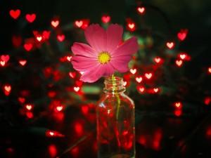 Flor en una botella junto a corazones iluminados