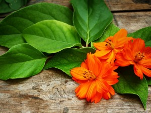 Postal: Flores con pétalos naranjas y hojas verdes