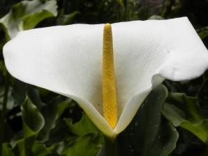 Gran cala blanca
