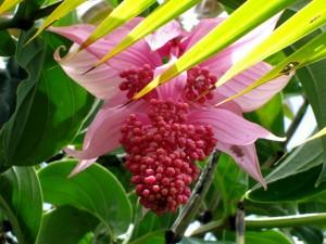 Una bella flor colgando de la planta