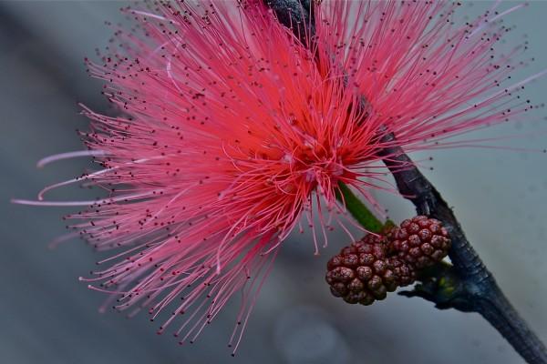 Flor con nuevos brotes en la rama