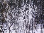Nieve entre las ramas