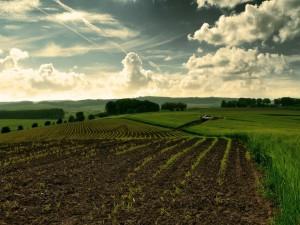 Coche en el campo de cultivo