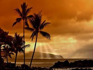 Postal: Palmeras junto al mar en un bello atardecer