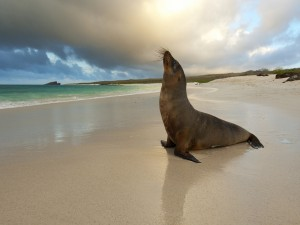 Postal: Una foca en la playa