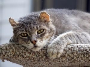 Un gato cansado