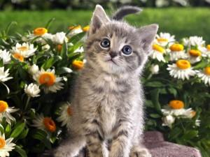Postal: Un gatito en el jardín