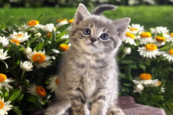 Un gatito en el jardín