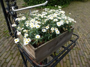 Postal: Caja con margaritas sobre la bicicleta