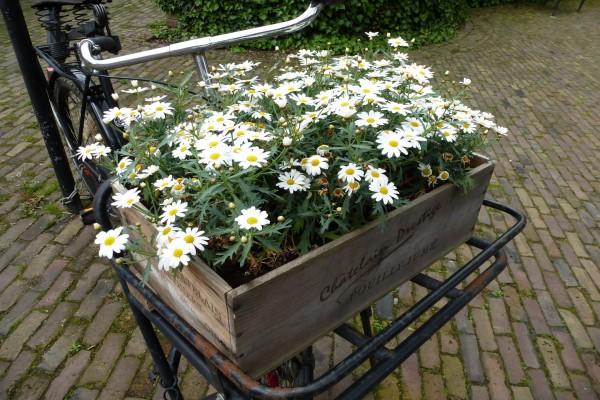 Caja con margaritas sobre la bicicleta