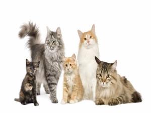 Gatos grandes y pequeños