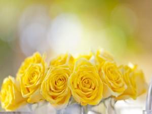 Postal: Pequeñas rosas amarillas