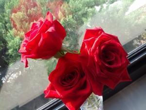 Postal: Rosas rojas junto a la ventana