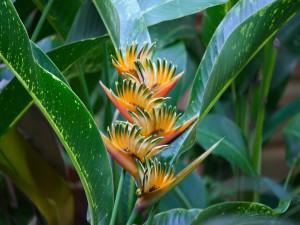 Postal: Planta tropical ave del paraíso