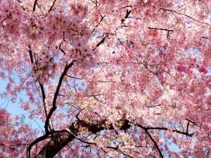 Un árbol en flor