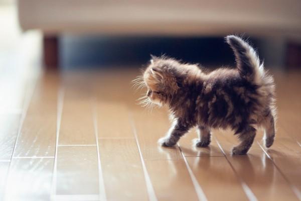 Un pequeño gato caminando por el suelo