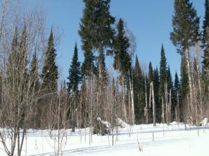 Postal: Nieve cubriendo el suelo