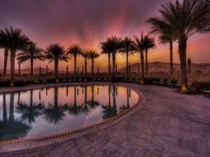 Palmeras junto a una piscina en el desierto
