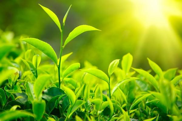 El sol iluminando las hojas verdes de las plantas
