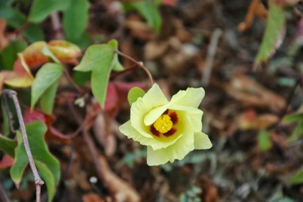 Una flor con delicados pétalos de color amarillo