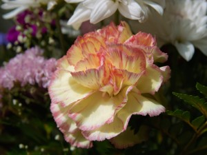 Postal: Una bonita flor jaspeada
