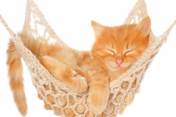 Gatito descansando en una hamaca