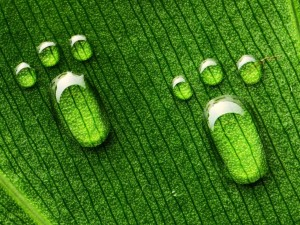 Huellas de pie sobre la superficie de una hoja verde