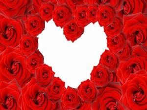 Corazón blanco entre rosas rojas