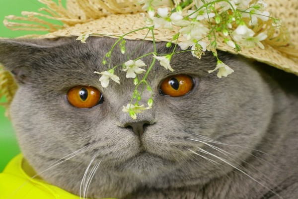 Gato con sombrero y flores