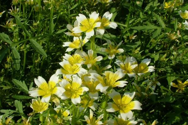 Flores blancas y amarillas en una planta
