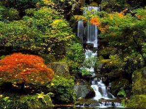 Postal: Una bella cascada entre árboles y plantas