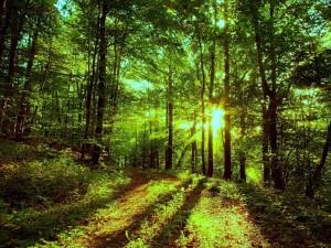 Postal: Interior del bosque iluminado por los rayos de sol