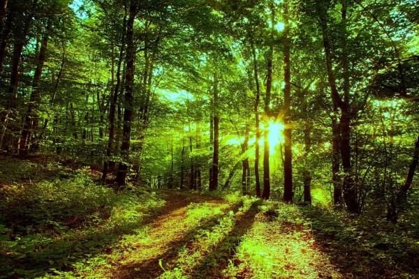 Interior del bosque iluminado por los rayos de sol