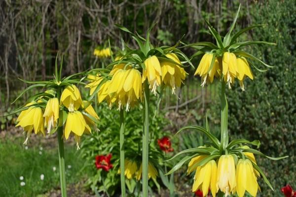 Originales flores de color amarillo