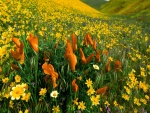 Un campo cubierto de flores amarillas y naranjas