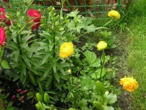 Postal: Flores creciendo en el jardín