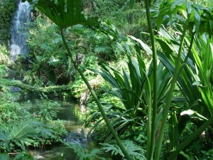 Postal: Cascada y riachuelo entre plantas verdes