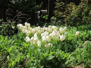 Tulipanes blancos junto a la mariposa decorativa