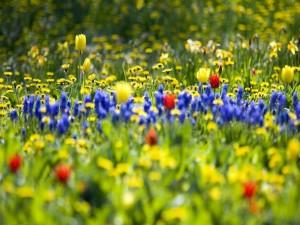 Campo con bellas flores en primavera