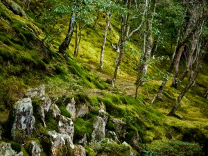Árboles, musgo y rocas en el bosque