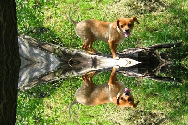 El reflejo de un perro